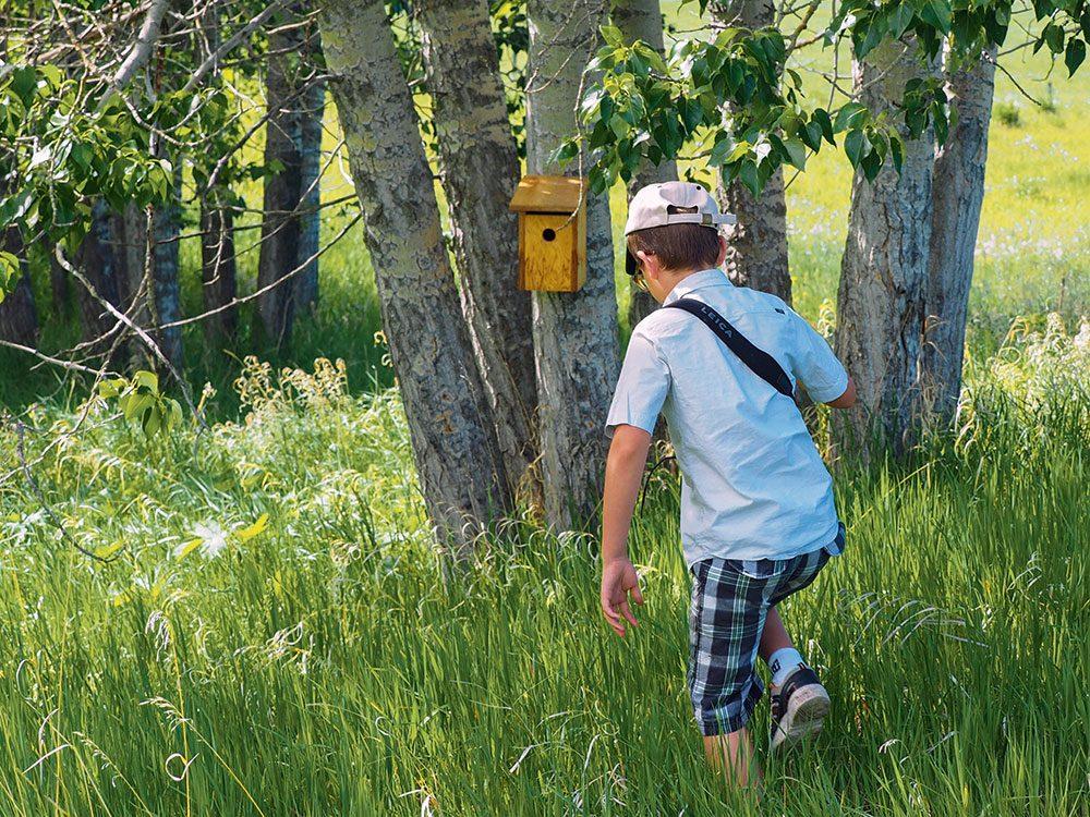Mountain bluebird box on trail