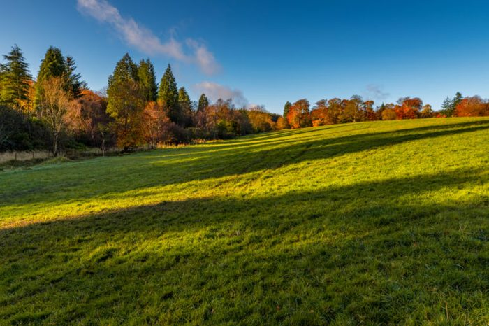 Autumn in Blairadam Area, Scotland