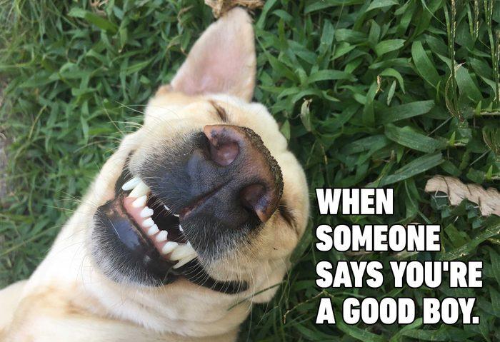 Funny dog memes - good boy smiling