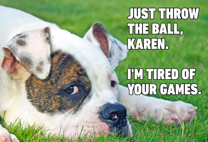 Funny dog memes - throw the ball