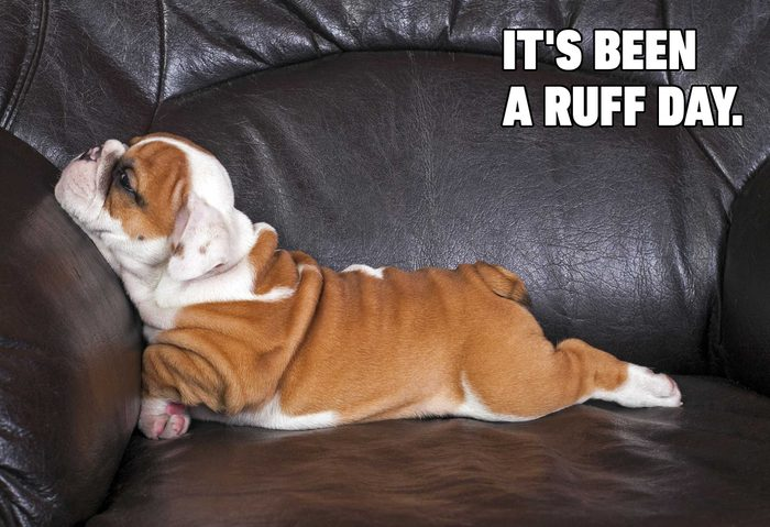 Funny dog memes - been a ruff day