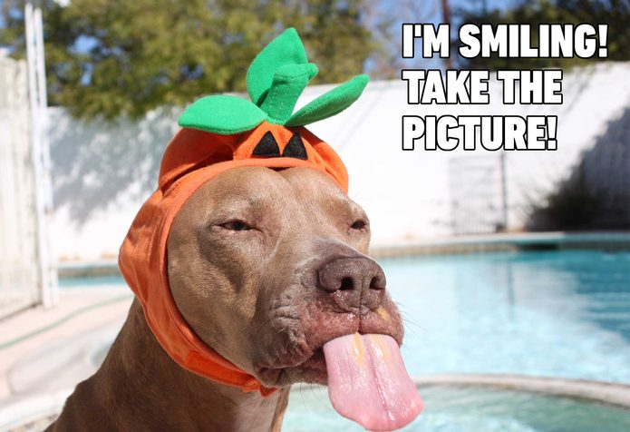 dog pumpkin meme