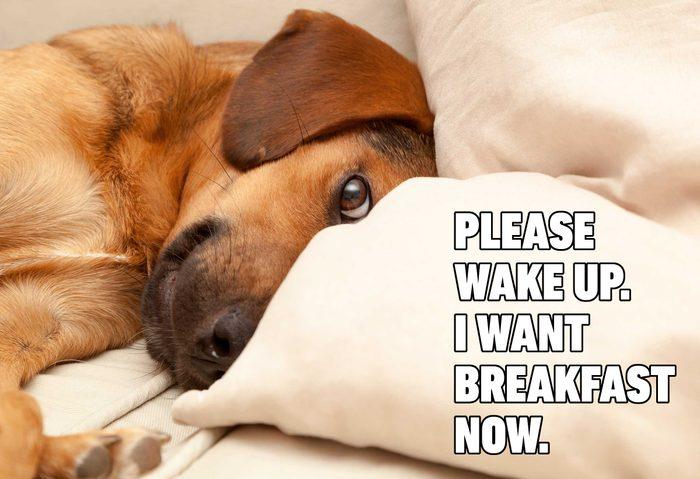 dog breakfast meme