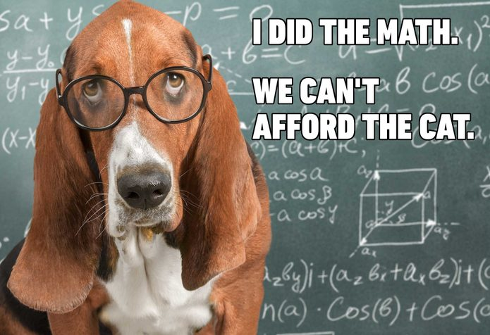 dog math cat meme