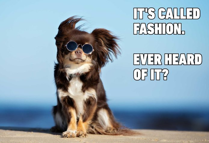dog meme fashion
