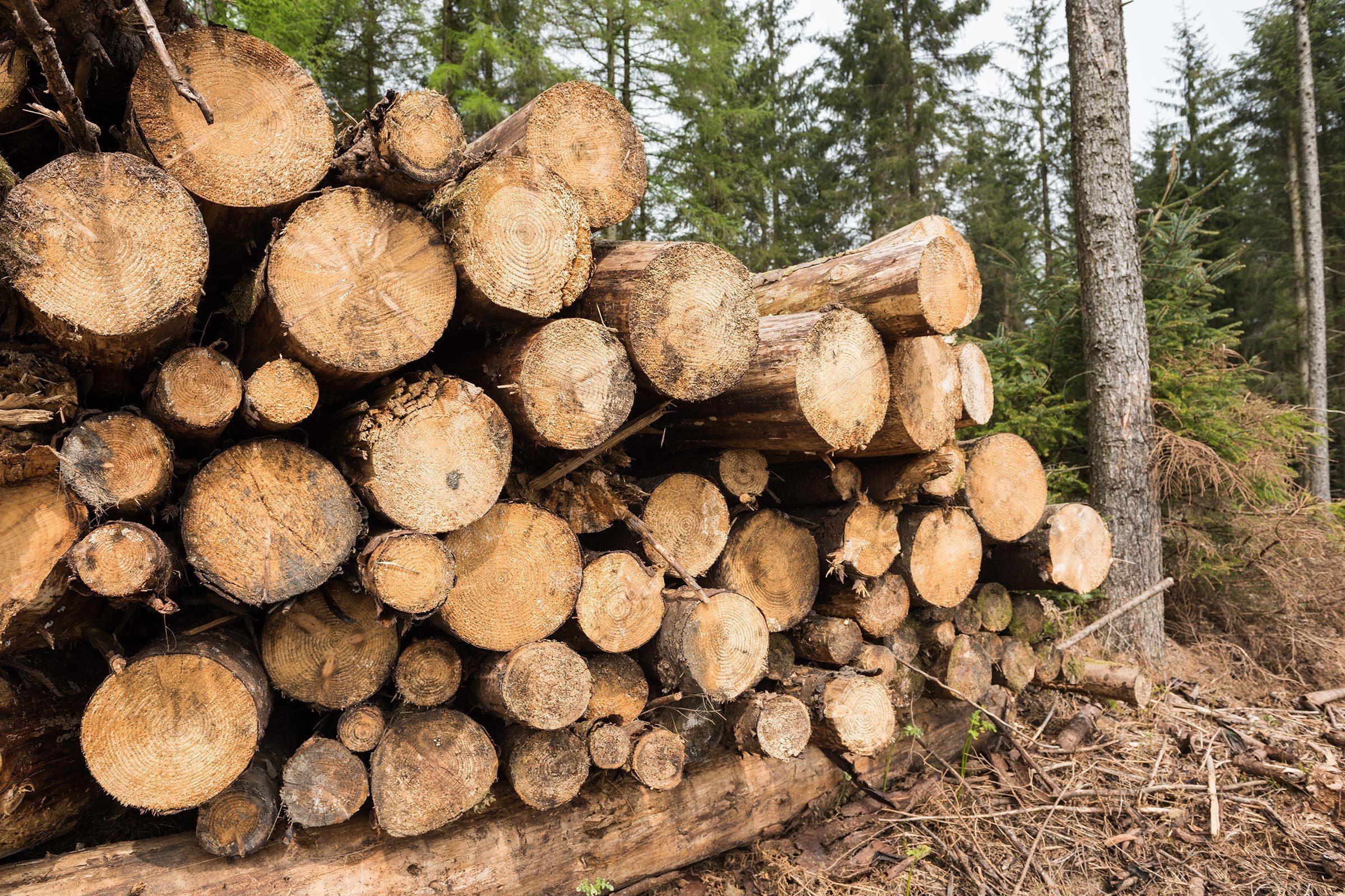 tree logs cut down