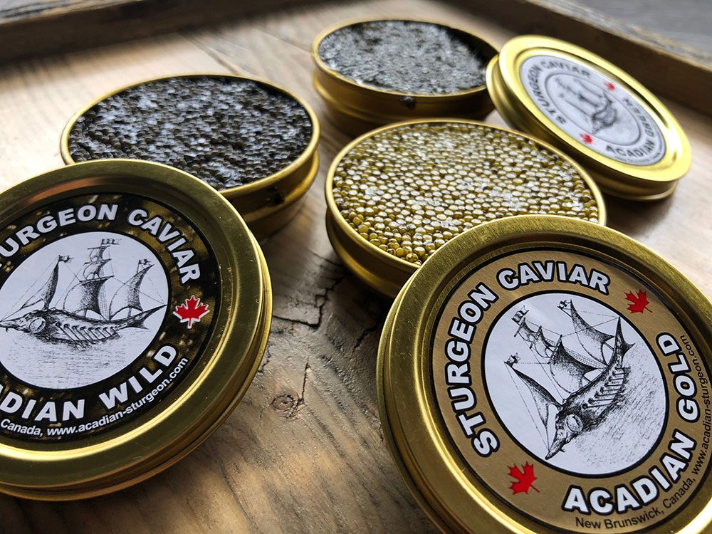 Canadian attractions - Acadian Sturgeon & Caviar safari