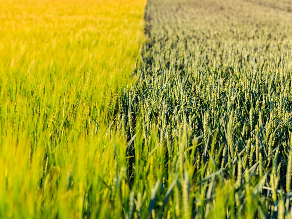 Agriculture (crops)