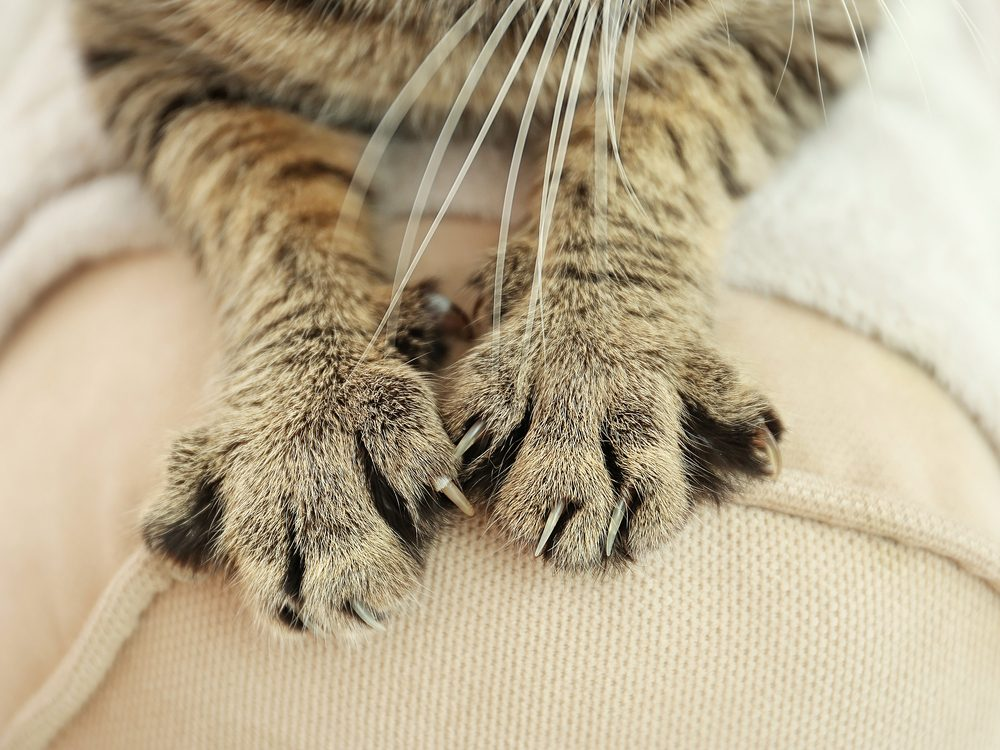 Keep cat from scratching furniture