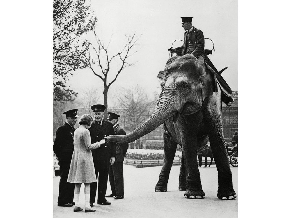 Queen Elizabeth as a kid playing with an elephant
