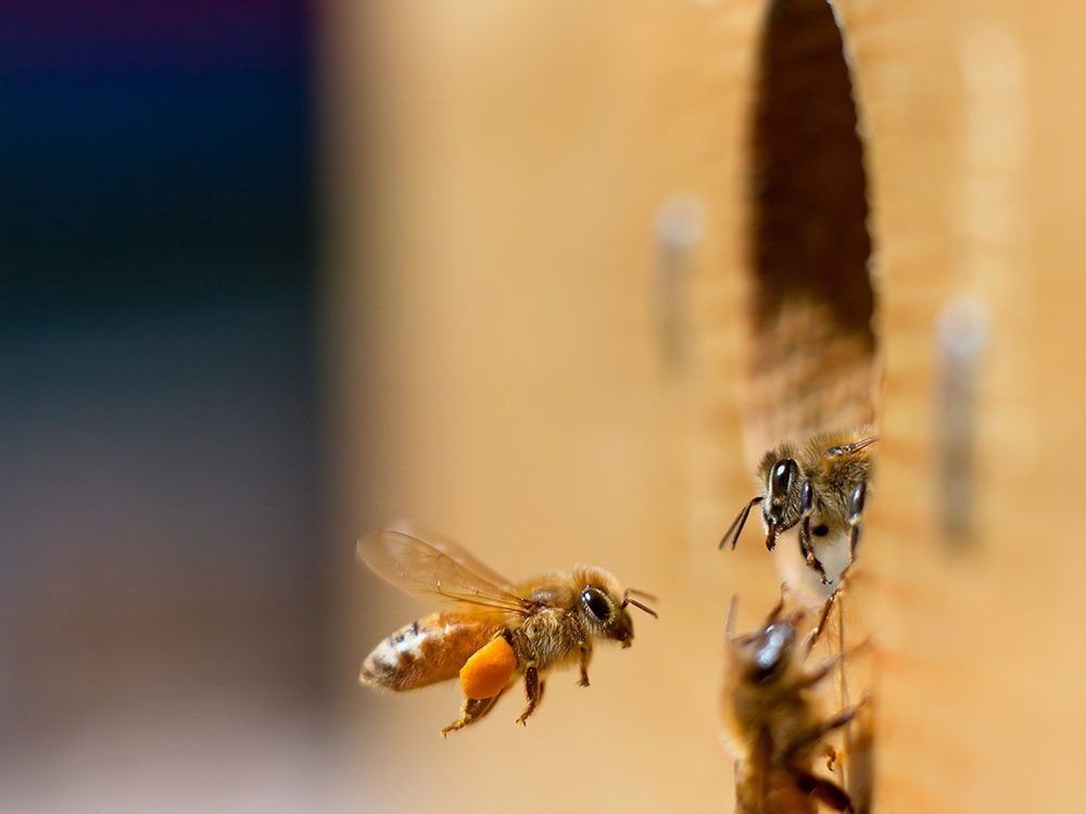 Save the bees - buy a native bee house