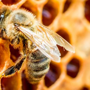 Save the bees - honeybee in hive