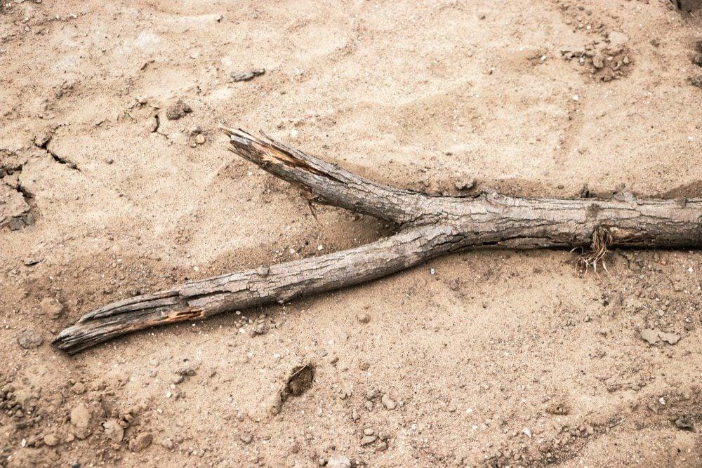 Stick on dry ground.