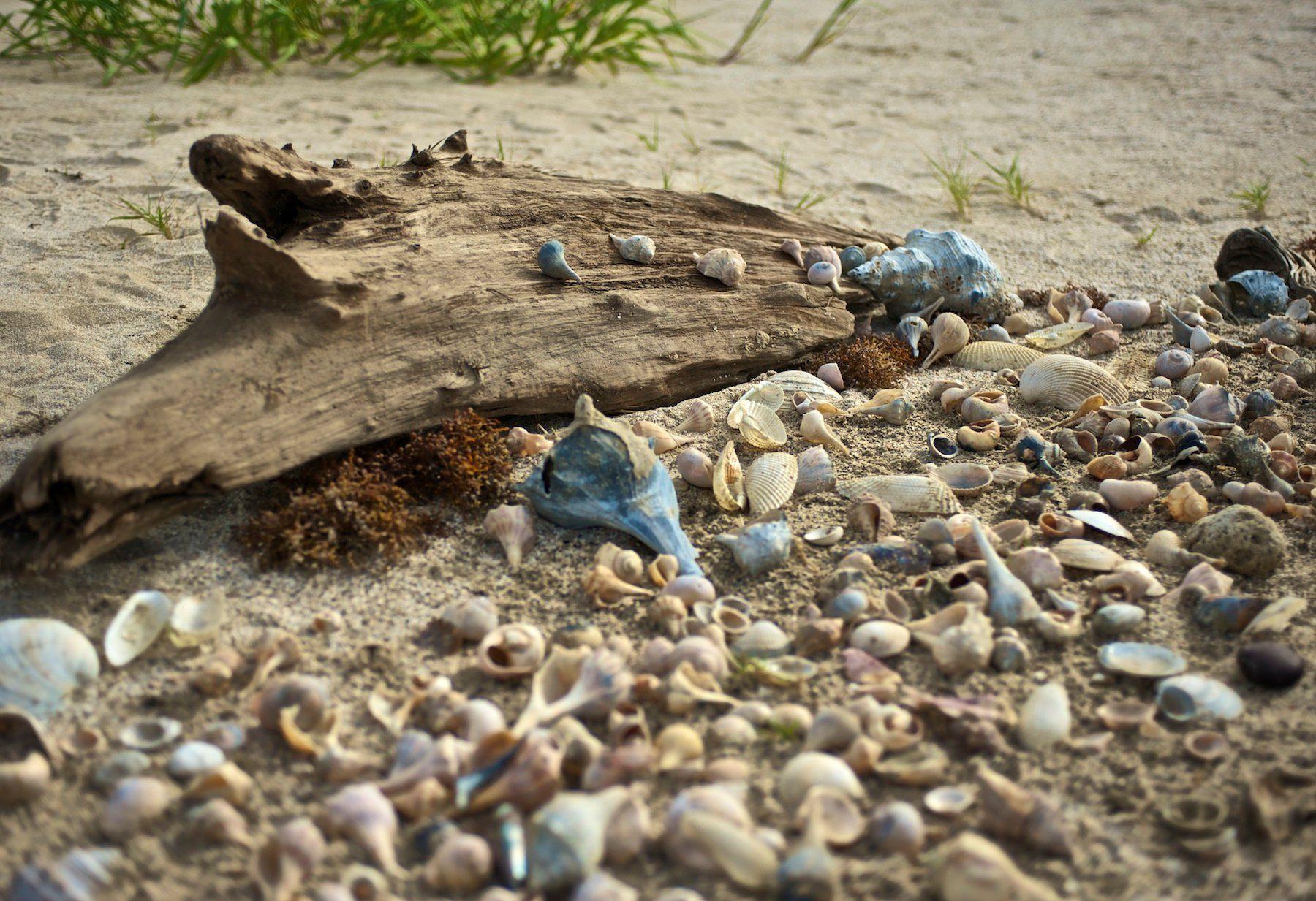 shells on driftwood louisiana