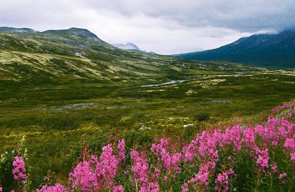 Haines Highway landscape