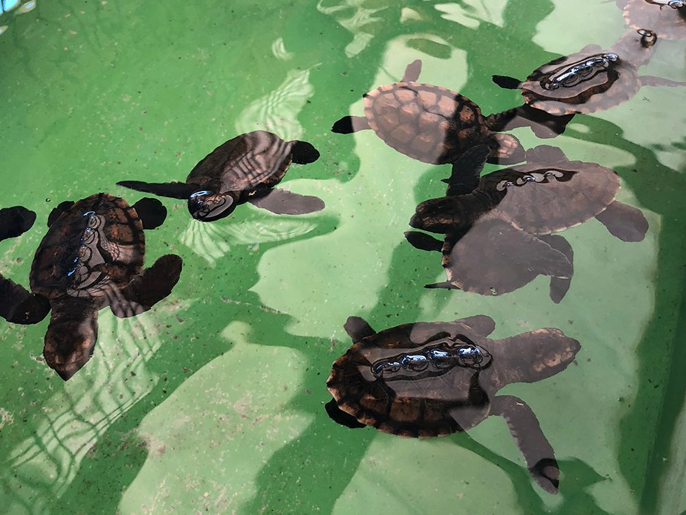 St. Vincent and the Grenadines - Old Hegg Turtle Sanctuary