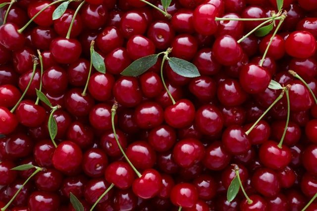 Close up of pile of ripe cherries with stalks and leaves. Large collection of fresh red cherries. Ripe cherries background.