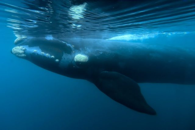 Argentina Whales - 11 Aug 2017