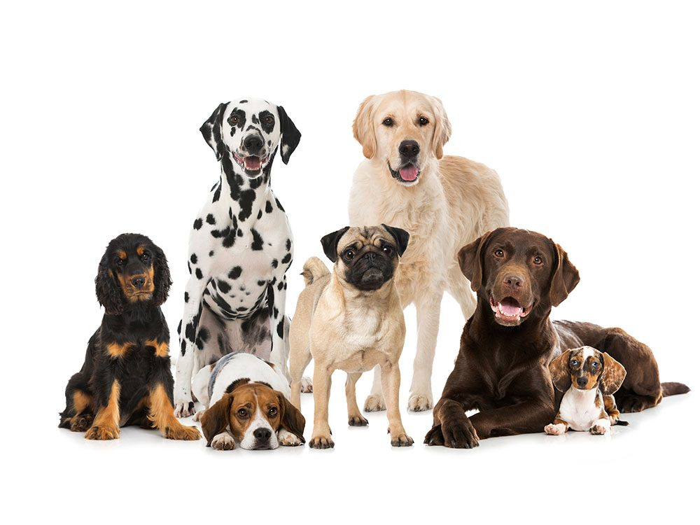 Boost your pet's life span - dog DNA testing