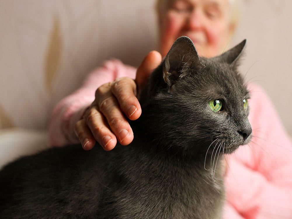 Boost your pet's life span - senior cat