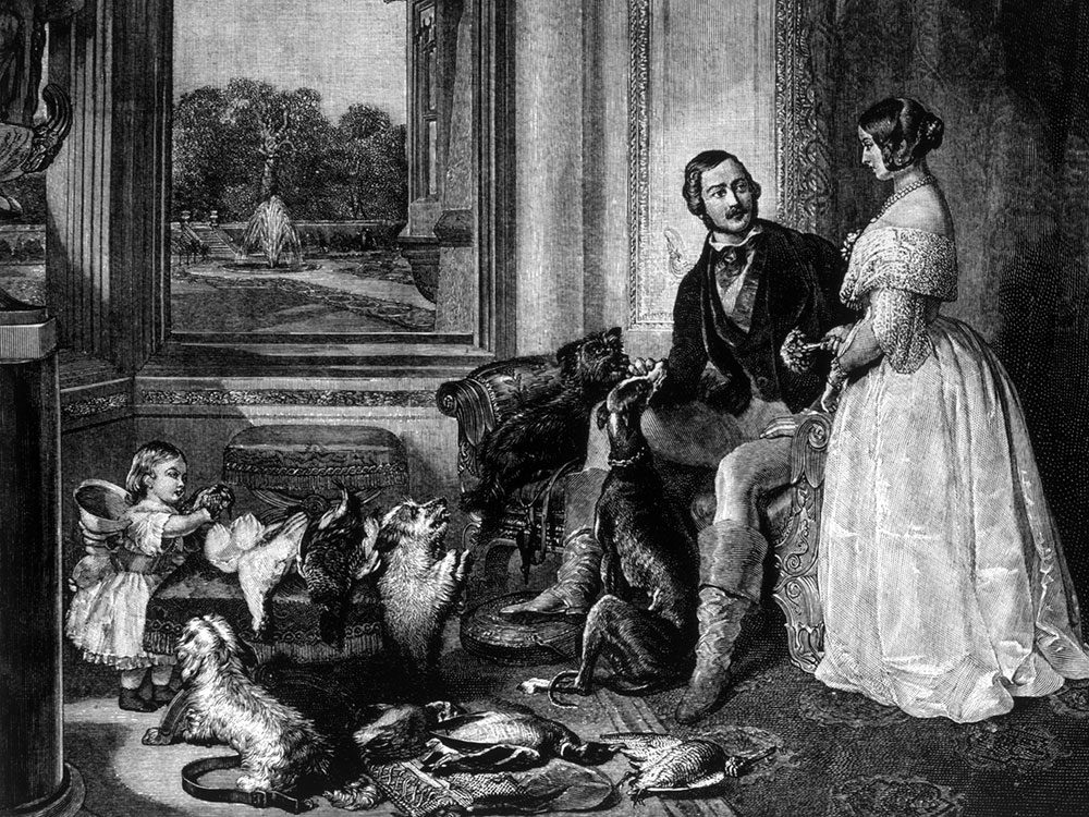 Does my dog love me - Queen Victoria and her dogs