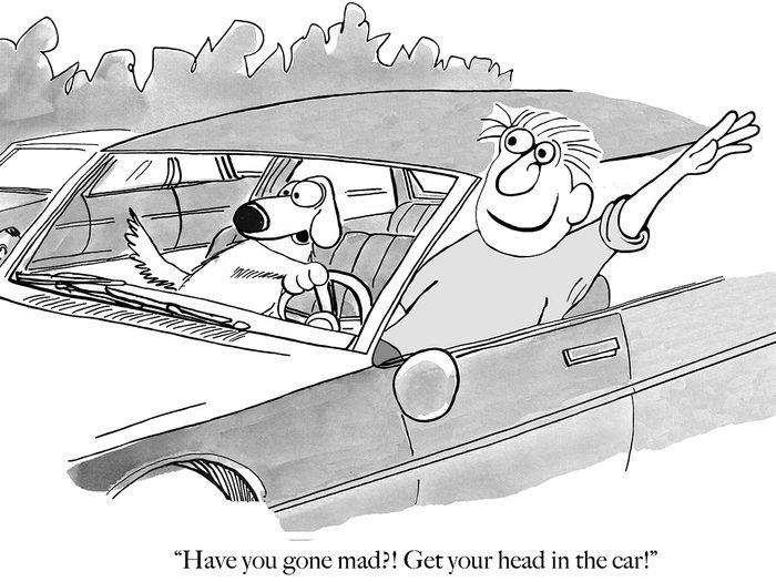 Funny dog cartoons - car
