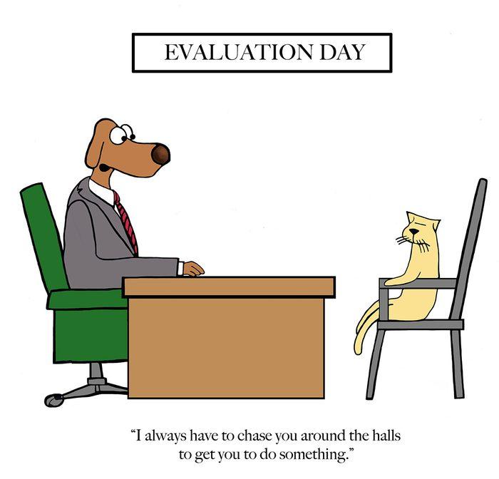 Funny dog cartoons - evaluation day