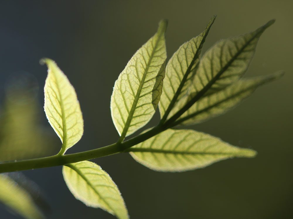 Light shining through leaves