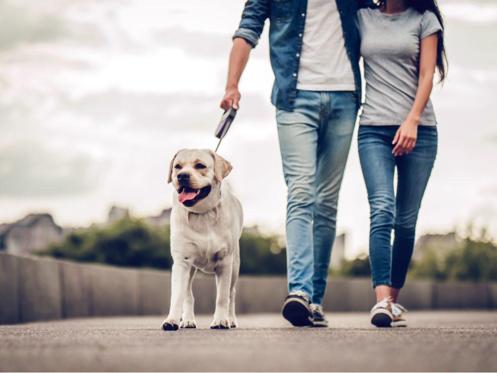 heart health dog walking