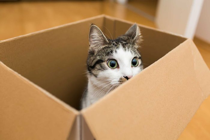 Why-Your-Cat-Loves-Boxes,-According-to-Science-318174692-kmsh