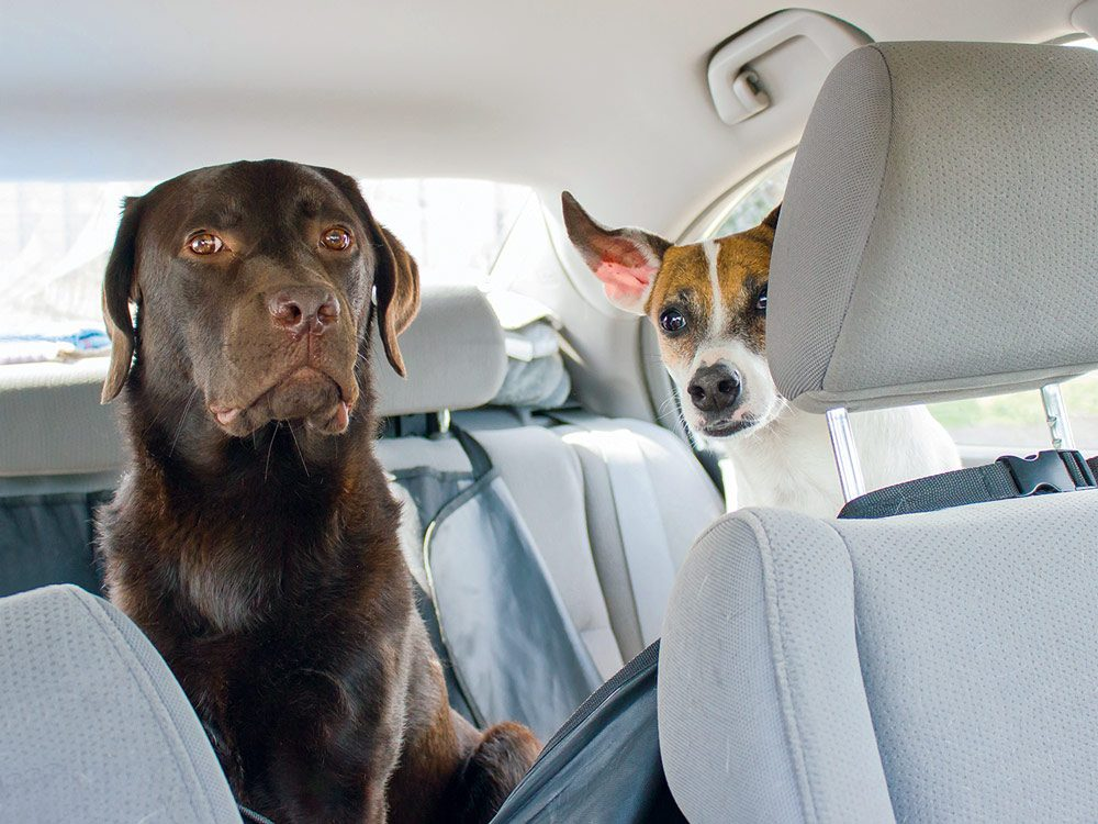 Gryffin and Zak in the backseat on the road trip