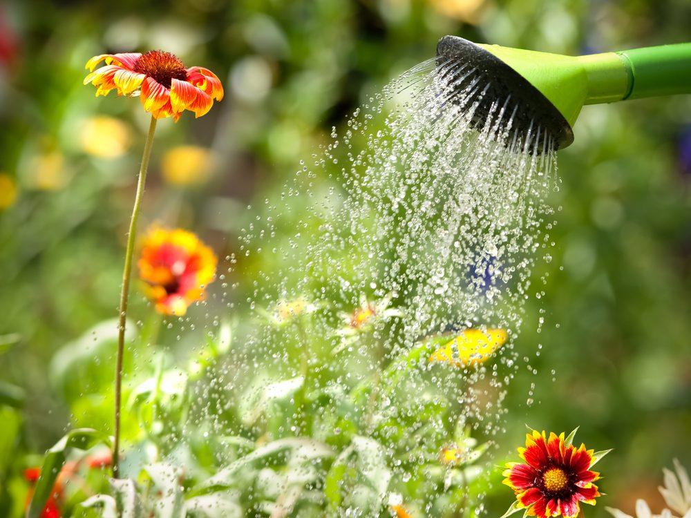 Watering plants in garden