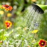 What You Should Know Before Starting a Garden