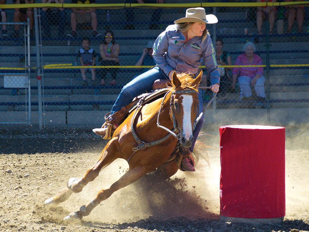 Tie-down roping at the Williams Lake Stampede