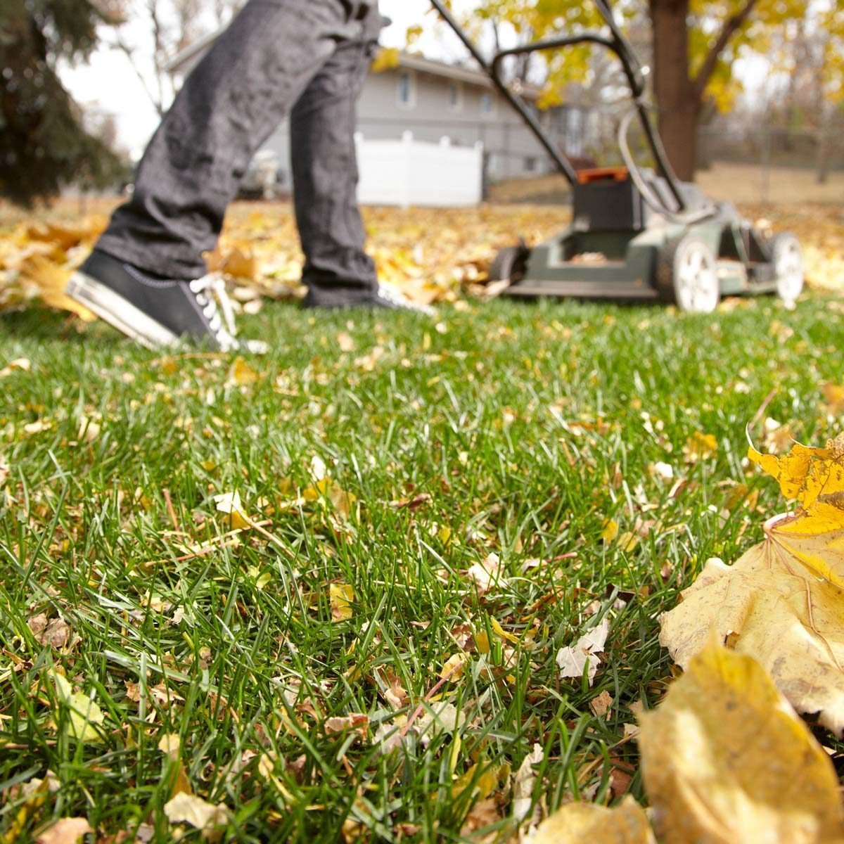 Fall Grass Lawn Fertilizer
