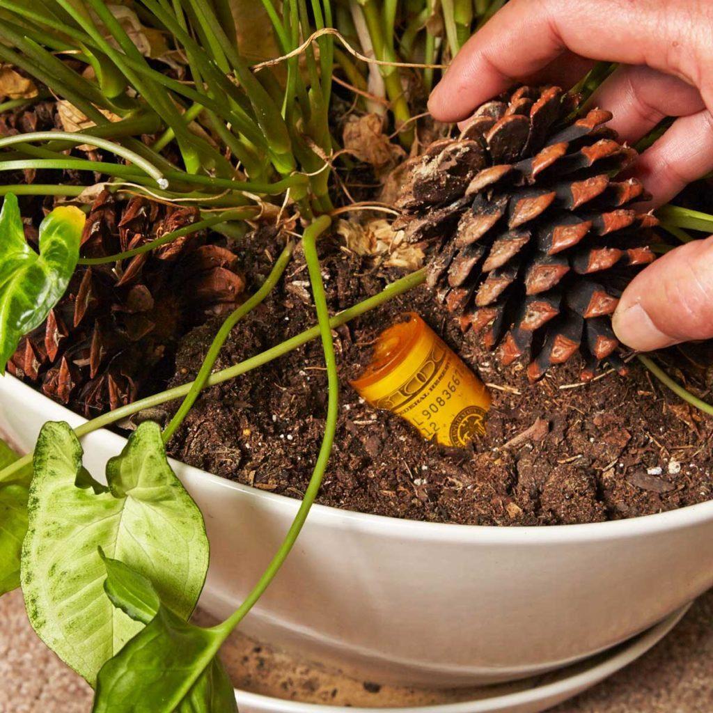 Hiding money in pot plant