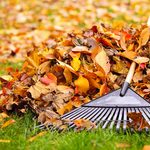 10 Fall Yard Maintenance Tips You'll Wish You Knew Sooner
