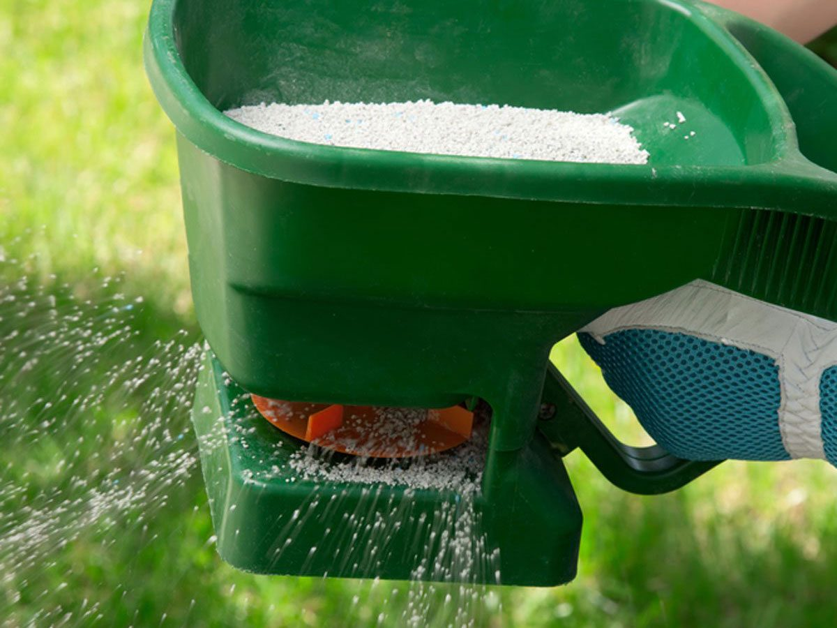 Spreading fertilizer on lawn