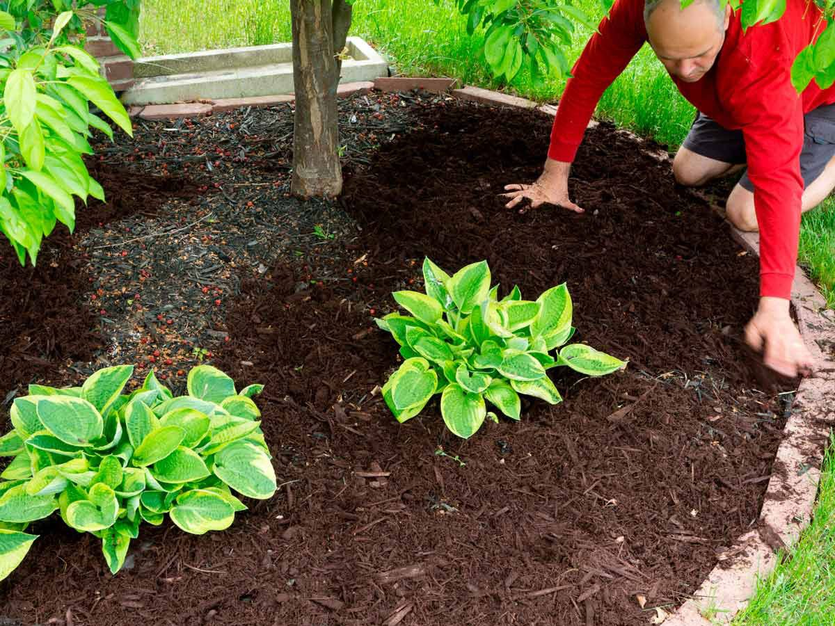Refresh your mulch