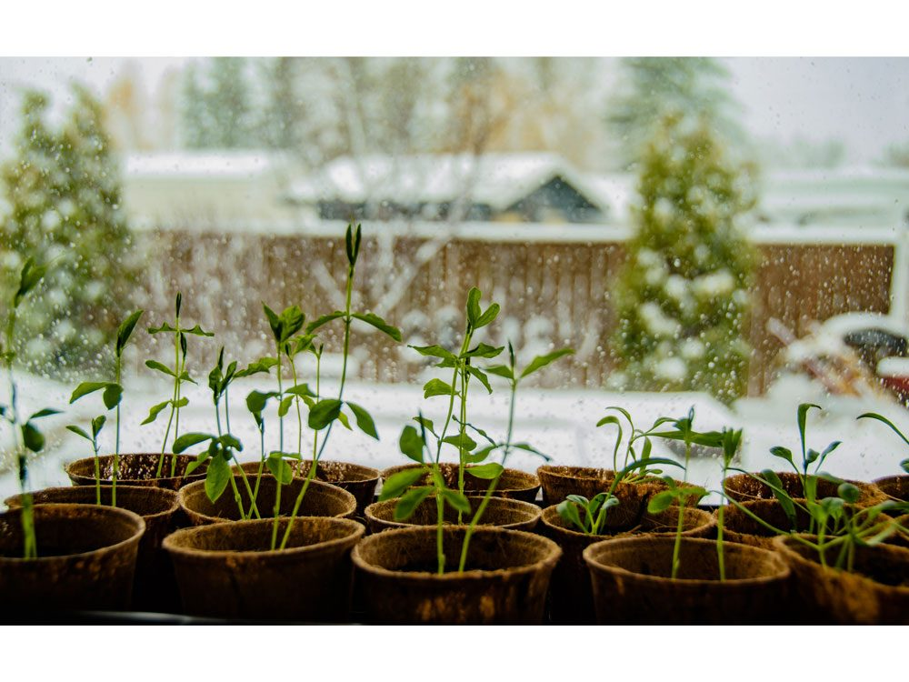 garden photography seedlings
