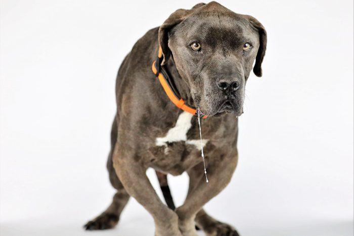 ugly dog grendel