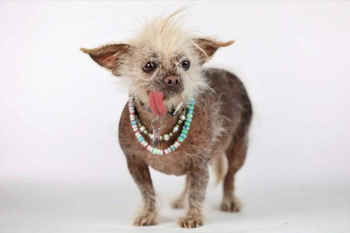 ugly dog josie
