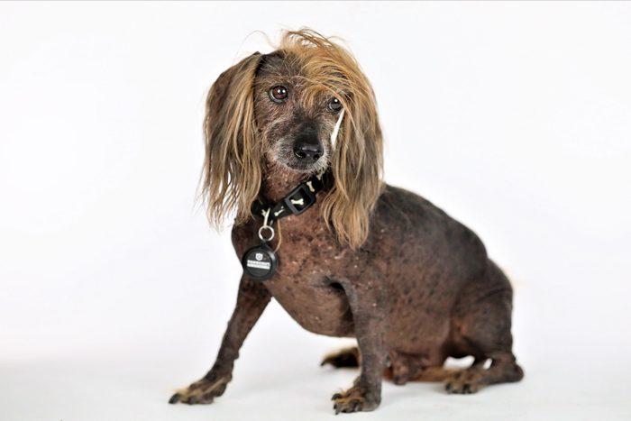 ugly dog himisaboo
