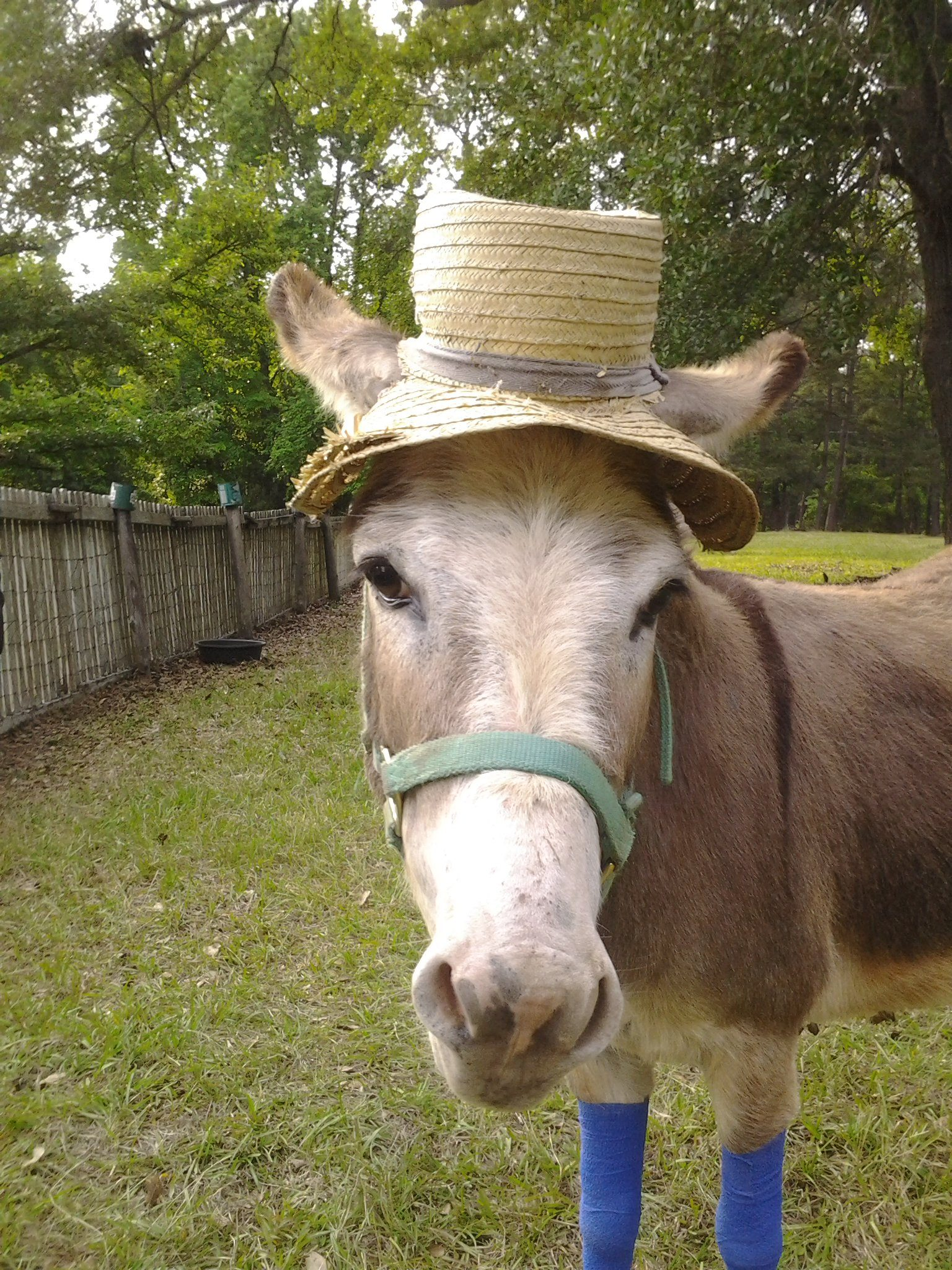 horse with cowboy hat