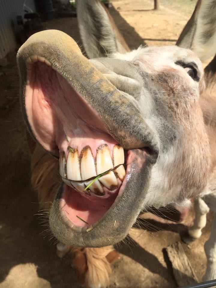 donkey smile