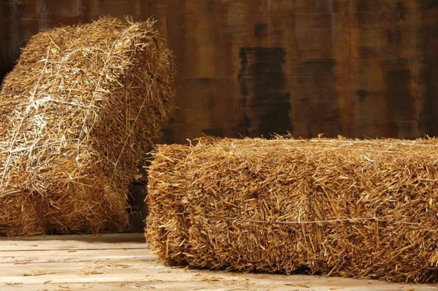 Studio shot of hay, isolated on wooden floor