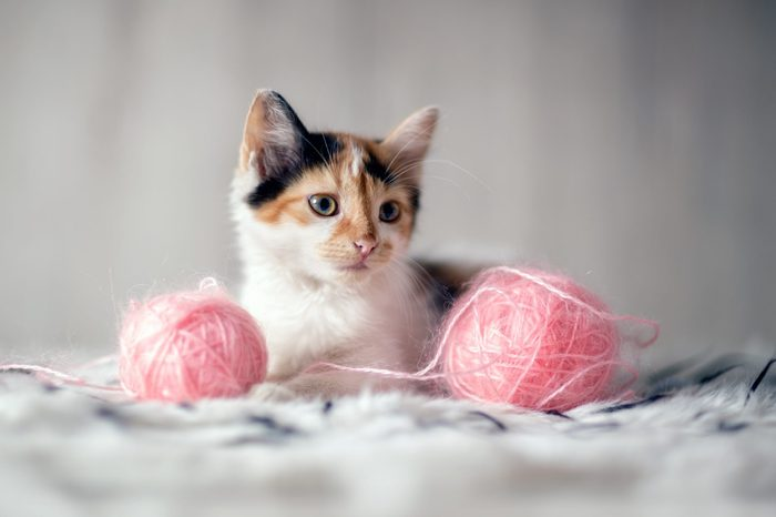 adorable kitten with toys