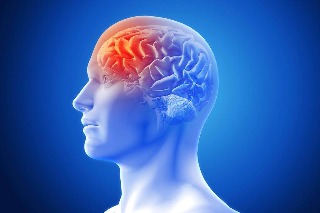 Digital render of human brain