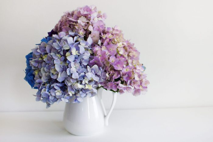 Pastel Hydrangeas In A Glass Vase. Space for text