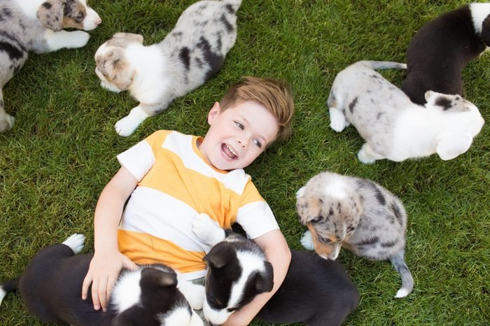 A five-year-old boy with a striped t-shirt on a lawn surrounded by corgi puppies. Friendship of animals and children.